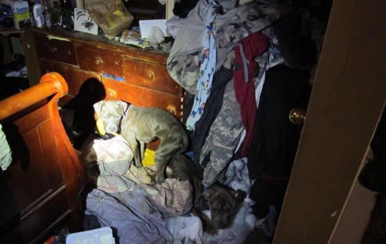 """A dog stands in a house that was in """"deplorable condition"""" according to Bridgeville Police"""