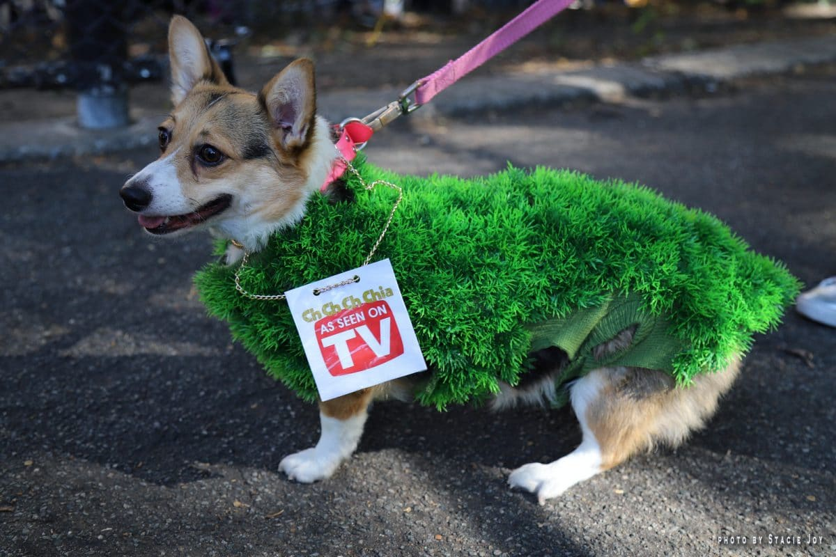 A small dog dressed as a Chia Pet in a Halloween pet costume contest