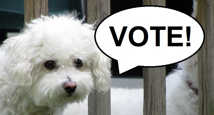 "A small dog pictured with a speech bubble that says ""Vote"""