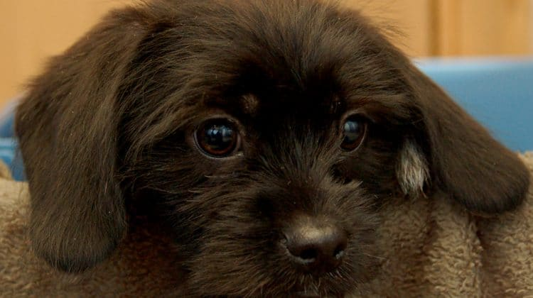 Bridgeville and Statewide, Lawmakers Mull Ban on Puppy Mill Retail Sales